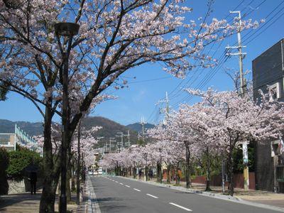 IMG_0157甲山と桜