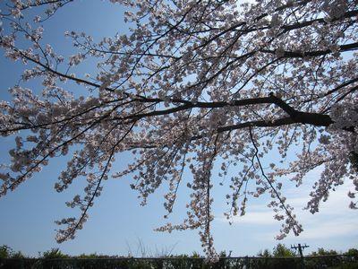 IMG_0168新幹線公園1
