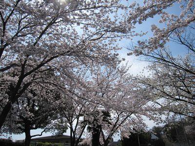 IMG_0172新幹線公園3