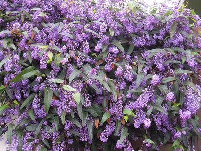 IMG_0178紫