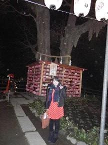 江ノ島ご縁結びの木2015