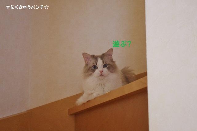 15IMGP4905.jpg