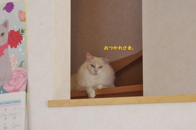 15IMGP5417.jpg