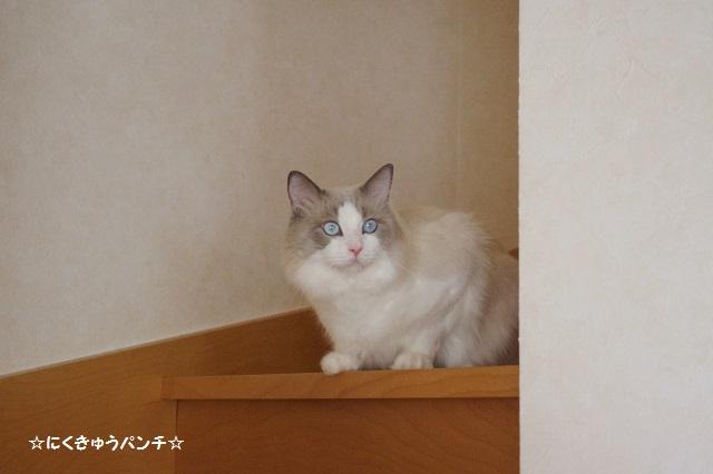 15IMGP6456.jpg