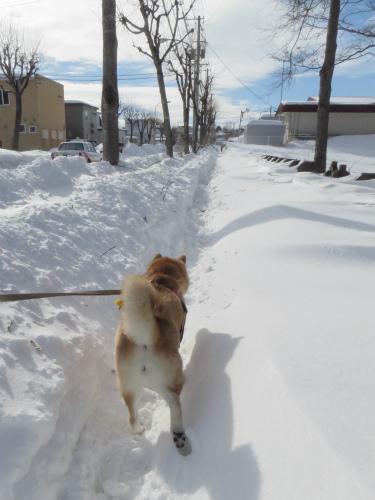 歩道が未除雪
