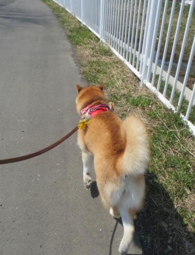 日干し散歩