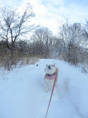 雪かけごっこ