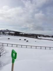 20150112 一面雪景色のレイクヴィラファーム