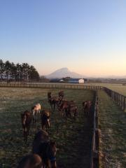 20150423 早朝の1歳レイクヴィラっ仔ちゃん達、柵の上から^^)