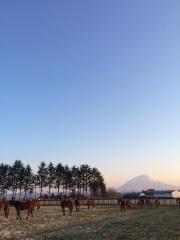 20150423 早朝の1歳レイクヴィラっ仔ちゃん達^^)