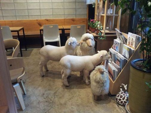 羊カフェ01