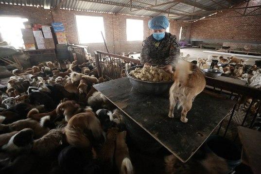 中国犬シェルター01