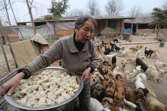 中国犬シェルター02