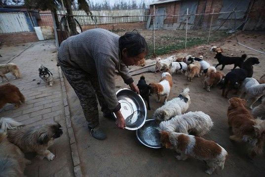 中国犬シェルター03