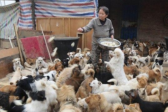 中国犬シェルター04
