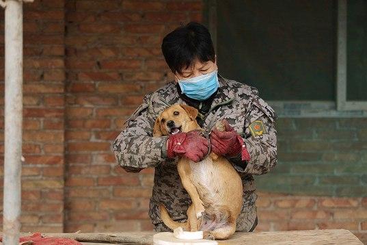 中国犬シェルター05