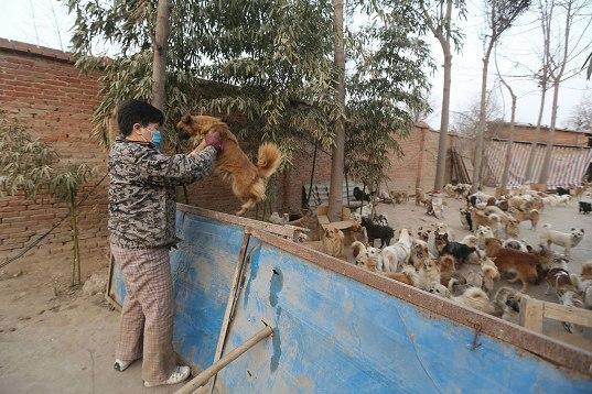 中国犬シェルター06