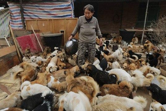 中国犬シェルター07
