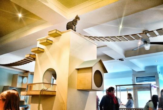 初の猫カフェ01