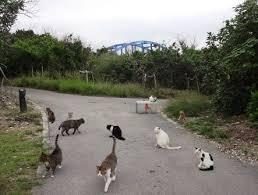 サザンゲート猫島03