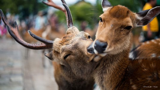 animal-couples-deer880.jpg