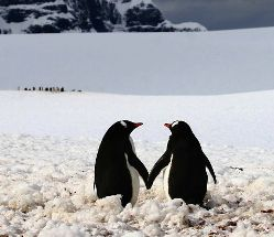 animal-couples-in-love-penguins__880.jpg