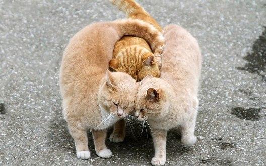 animal-love-101880.jpg