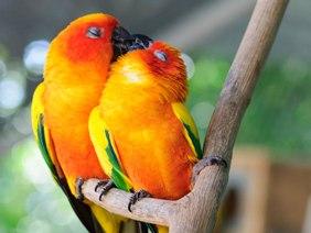 animal-love-110880.jpg