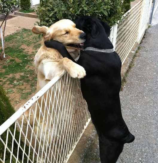 animal-love-121880.jpg