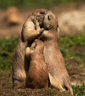 animal-love-22880.jpg