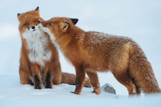 animals-love-couple-10880.jpg