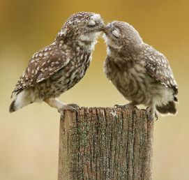 animals-love-couple-8880.jpg