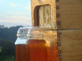 honey-on01.jpg