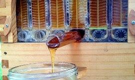 honey-on02.jpg