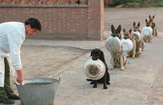 police-dogs1.jpg