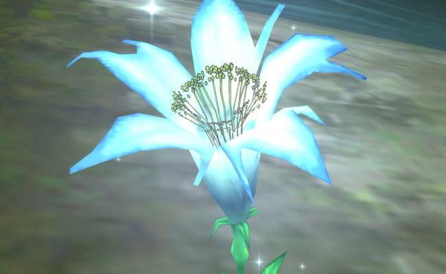 テンスの花48