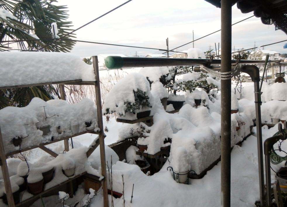 大雪の降った26年の草花