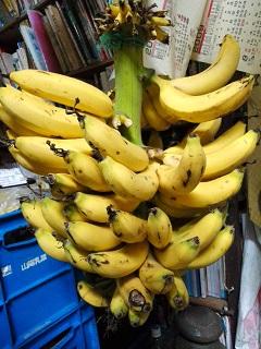 冬のバナナ