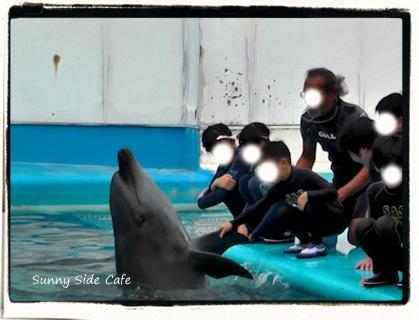 dolphinswim1.jpg