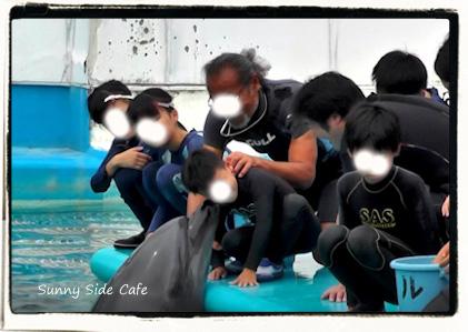 dolphinswim2.jpg