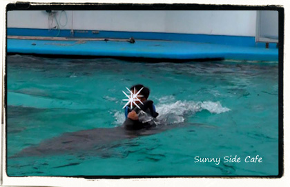dolphinswim3.jpg