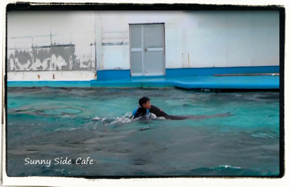 dolphinswim4.jpg