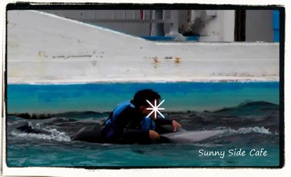 dolphinswim5.jpg