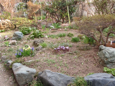 だいぶ春らしくなってきたお庭