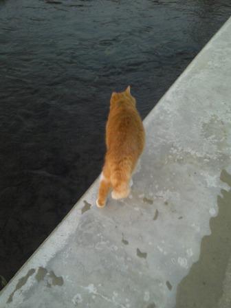 お友達ん家のネコさん