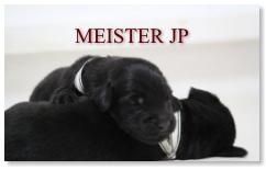 MEISTER JP仔犬情報へ