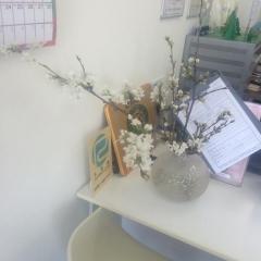 田口不動産 梅 桜
