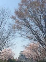 田口不動産  桜