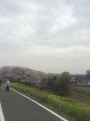 桜 2015 田口不動産