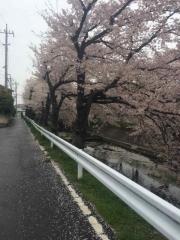 田口不動産 行田の桜
